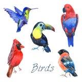 Icônes tropicales exotiques d'aquarelle d'oiseaux réglées illustration stock