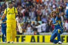 ICC τρόπαιο Σρι Λάνκα και Αυστραλία πρωτοπόρων στοκ φωτογραφίες με δικαίωμα ελεύθερης χρήσης