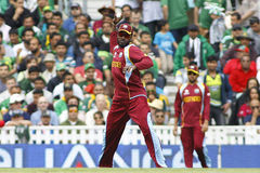 ICC Champions Trophy Pakistan v West Indies. LONDON, ENGLAND - June 07 2013: West Indies Chris Gayle fielding during the ICC Champions Trophy cricket match royalty free stock image