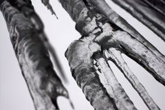 Ice. A group of large icicles Stock Image