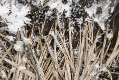 Ice. Frozen flow field in winter Stock Image