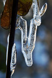 Ice. Nice icicles hang in autumn on the sheets Royalty Free Stock Photos