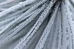 Ice. Frozen needles with the crystals of ice Stock Photos