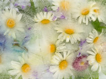 Ice abstraction with chamomile flowers royalty free stock photo