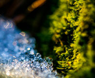 Ice against the moss Stock Image