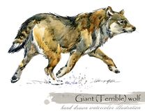Ice Age wildlife. prehistoric period fauna. Giant terrible wolf. Hand drawn watercolor animal stock illustration
