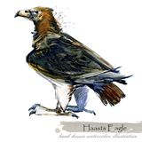 Ice Age wildlife. prehistoric period fauna. Haasts Eagle. Watercolor hand drawn animal royalty free illustration