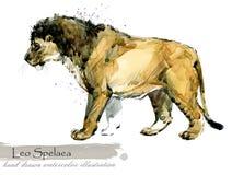 Ice Age wildlife. prehistoric period fauna. Leo Spelaea. Hand drawn watercolor animal royalty free illustration