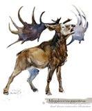Ice Age wildlife. prehistoric period fauna. Megaloceros giganteus. Hand drawn watercolor animal royalty free illustration