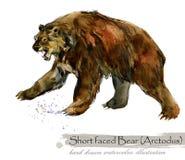Ice Age wildlife. prehistoric period fauna. Short faced bear. Arctodus. Hand drawn watercolor animal royalty free illustration
