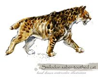Ice Age wildlife. prehistoric period fauna. Smilodon. Saber toothed cat. Hand drawn watercolor animal stock illustration