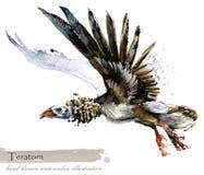 Ice Age wildlife. prehistoric period fauna. Teratorn. Hand drawn watercolor animal royalty free illustration