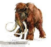 Ice Age wildlife. prehistoric period fauna. Woolly Mammoth. watercolor animal. Ice Age wildlife. prehistoric period fauna. Woolly Mammoth. hand drawn watercolor royalty free illustration
