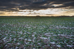 Ice on agricultural field. Stock Photos