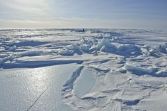 On the ice of the Arctic. Royalty Free Stock Images
