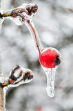 Ice azhur Royalty Free Stock Images