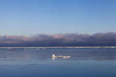 Ice in Baltic sea. Stock Photo