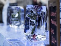 Ice bar with frozen rose in ice Stock Image