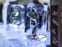 Ice bar with frozen rose in ice Stock Images
