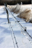 Ice on Barbed Wire after the Storm Stock Photos