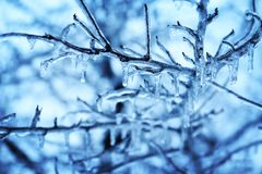 Ice on bare branches Stock Photography