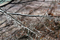 Ice on bare tree branches. Tree branches covered by ice Royalty Free Stock Image