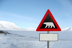 Ice bear Stock Photography
