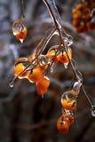 Ice berries Stock Image