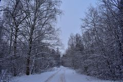 Ice-bound winter forest and road stock photography