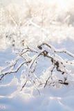 Ice Brances Stock Images