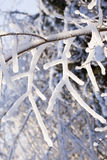 Ice Branch 3 Royalty Free Stock Image