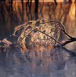 Ice branch in the frozen river Royalty Free Stock Images