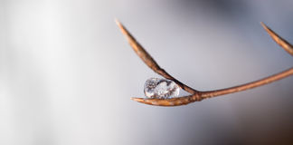 Ice on a branch. A round piece of ice sitting on a branch. The ice is so Clear you can see bubles and details inside it Royalty Free Stock Photo