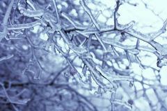 Ice branches Royalty Free Stock Photo