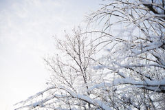 Ice Branches Stock Images