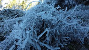 Ice branches Royalty Free Stock Photography