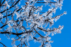 Ice on branches Stock Photos