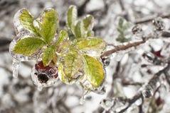Ice Brier Stock Image