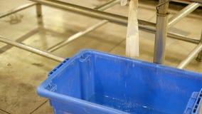 Ice bucket of fish in market melting waste water in blue bucket stock video