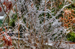 Ice on bushes. Ice forming on bushes in the winter in South Carolina Stock Image