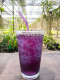 Ice butterfly pea beverage healthy on table Royalty Free Stock Photos