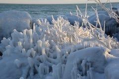 Ice cactus Stock Image