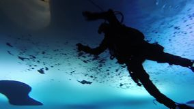 ICE CAMP SARGO, MARCH 2016, Diver dives in Arctic Ocean. A Navy diver dives under the ice shell of the Arctic Ocean stock video footage