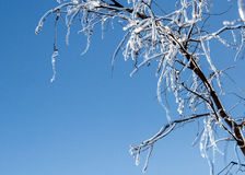 Ice chandelier Stock Image