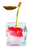 Ice and cherry Royalty Free Stock Photography