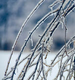 Ice on the Cherry Tree. A photograph of  branches of a cherry tree that are encased in ice Stock Image