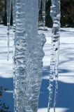 Ice Cicle. A large icecicle with a background of snow Royalty Free Stock Image