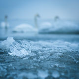 Ice closeup in the sea water Stock Images