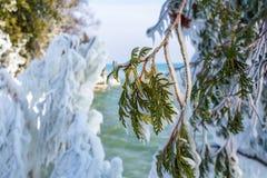 Ice coated cedar trees along beautiful lakeshore stock photos