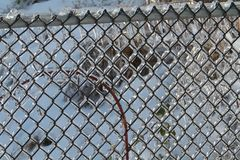 Ice coated chain link fence. An ice coated chain link fence with a vine in the background Royalty Free Stock Image